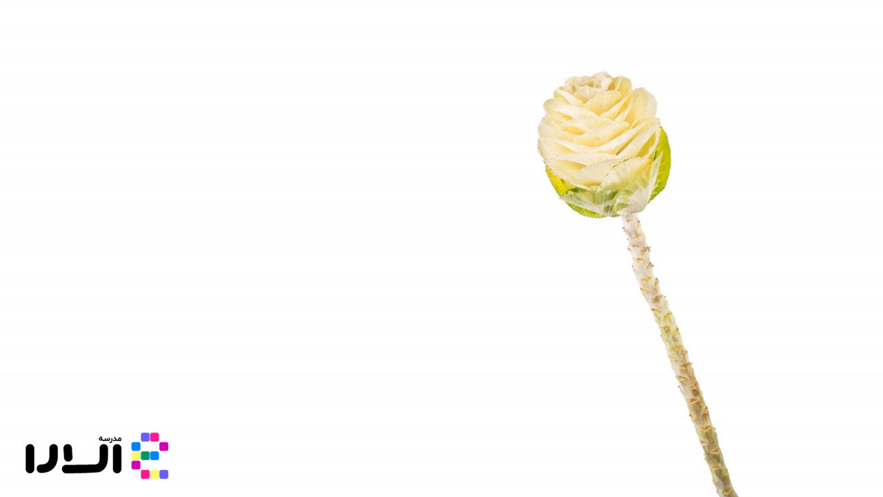 آشنایی با گیاه کلم تزئینی